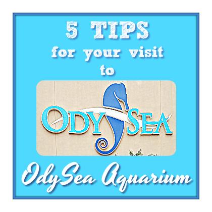 The Odysea Aquarium- 5 tips